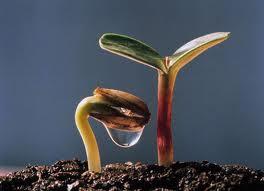 seme che germoglia e cresce