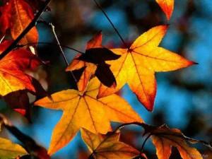 foglied'autunno