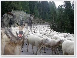 agnelli e lupi